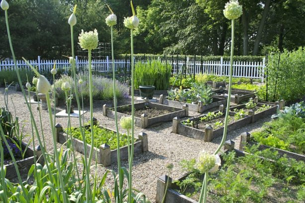 Gardening with Raised Beds How To