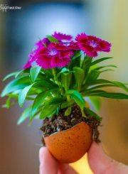 DIY Eggshell planter for Earth Day