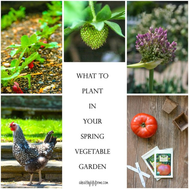 What to Planting Your Spring Vegetable Garden