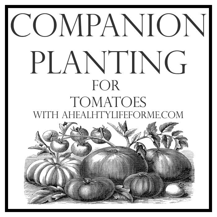 Companion Planting for Tomatoes | ahealthylifeforme.com