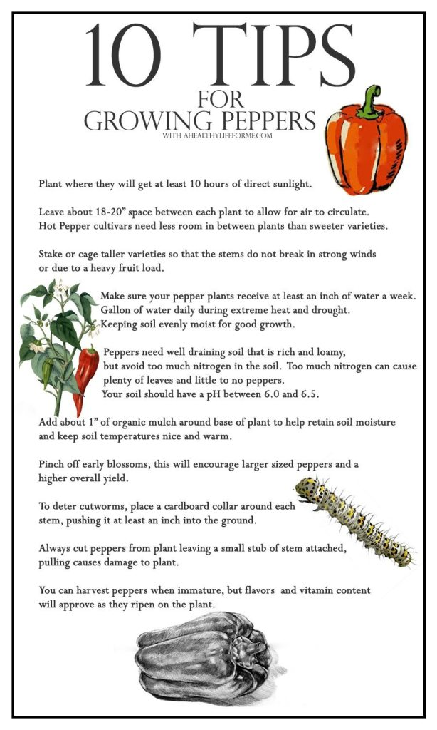 10 Tips for growing peppers   ahealthylifeforme.com