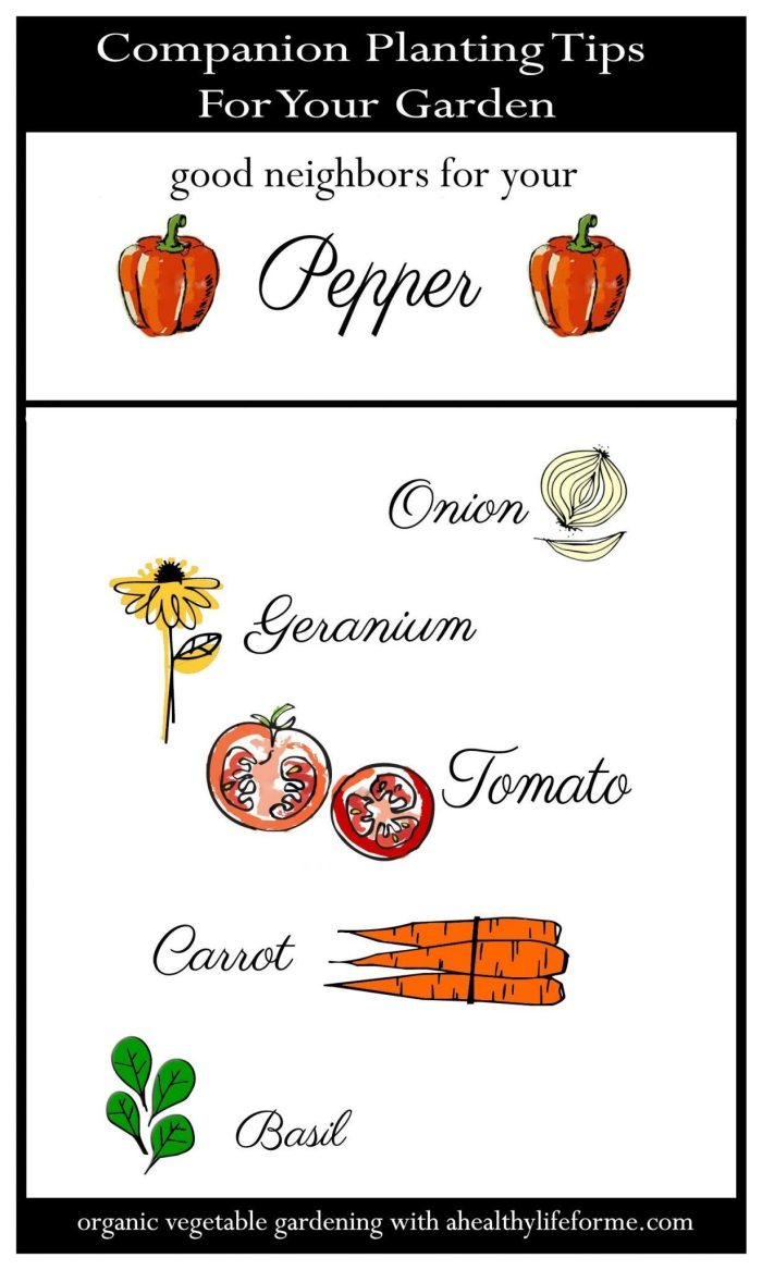 Companion Planting Tips for Peppers | ahealthylifeforme.com
