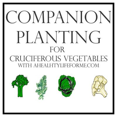 Companion Planting Tips for Cruciferous Vegetables