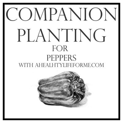 Companion Planting Tips for Peppers