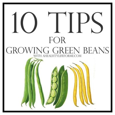 10 Tips for Growing Green Beans