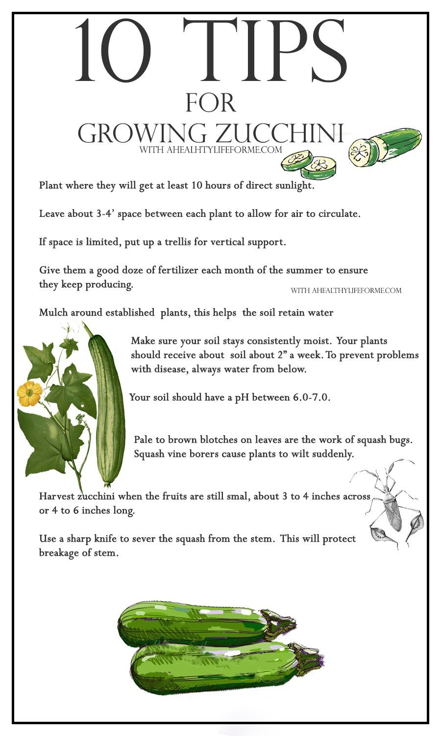 10 tips for growing zucchini a healthy life for me for Gardening tips