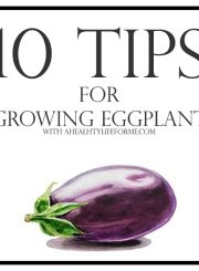 10 Tips for Growing Eggplant | ahealthylifeforme.com