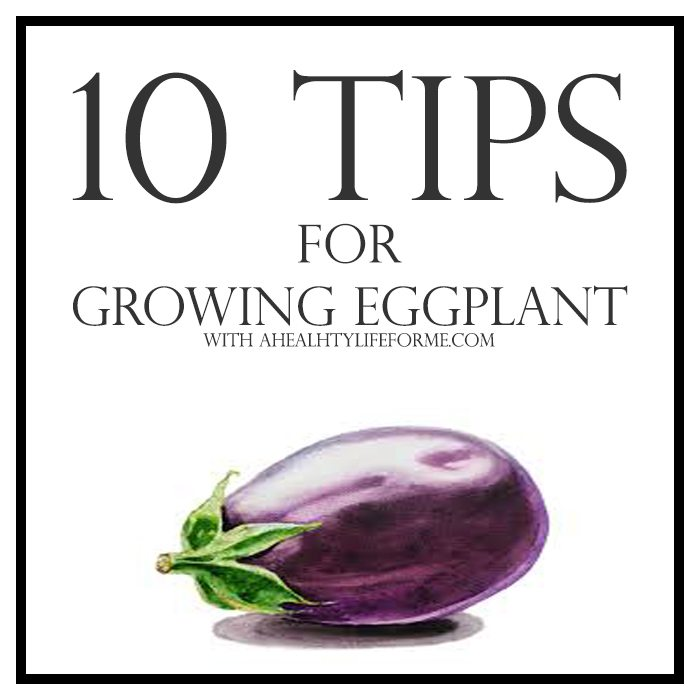 10 Tips for Growing Eggplant   ahealthylifeforme.com