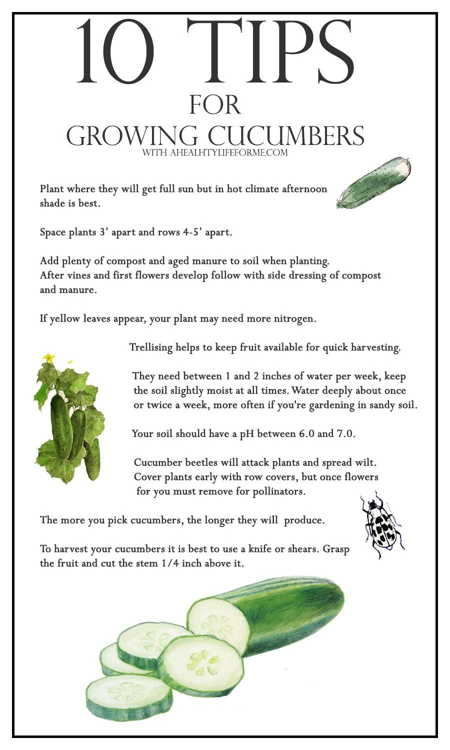 Living Room Decorating Ideas For Apartments For Cheap: 10 Tips For Growing Cucumbers