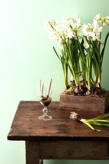 Forcing bulbs with ahealthylifeforme.com