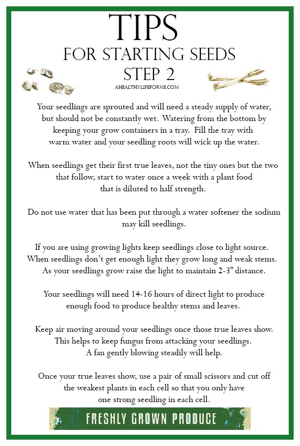 Tips for Starting Seeds Growing | ahealthylifeforme.com