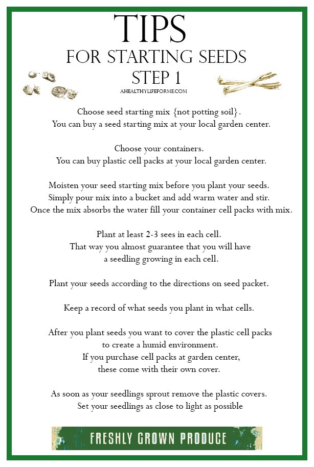 Tips for Starting Seeds Step 1 | ahealthylifeforme.com