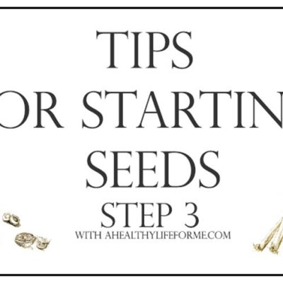 Tips for Starting Seeds Step 3 {transplanting}