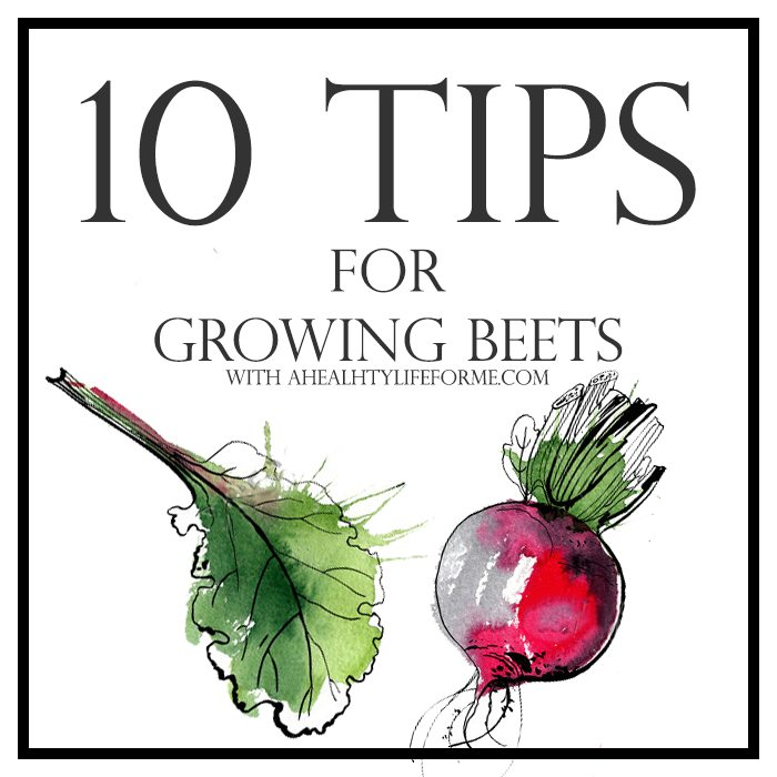 10 Tips for Growing Beets | ahealthylifeforme.com