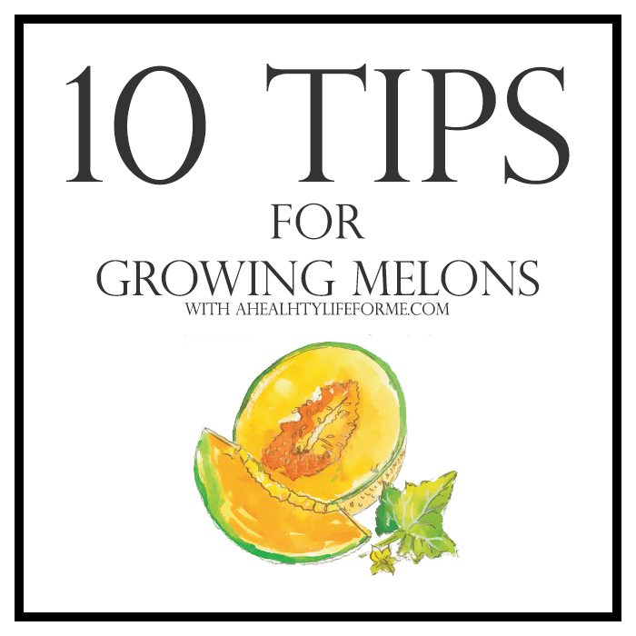10 Tips for Growing Melons | ahealthylifeforme.com