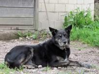 My sister's dog IMG_1311C