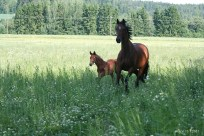 A proud mom and her foal IMG_5708C