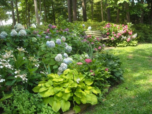 companion plants hydrangea