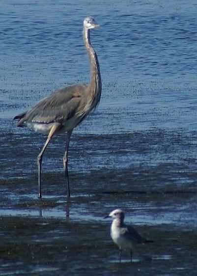 Birds in the Gulf