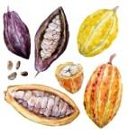 watercolor-cacao-beans-vector-8279147