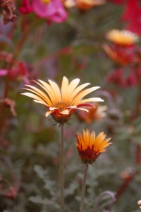 Flora of Roz Carr's Gardens 12