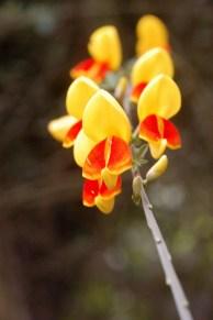 Flora of Roz Carr's Gardens 23