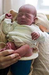 Wilhelmina on the potty... 1 day old