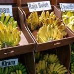 Budidaya Pisang: 10 Varietas Unggul Pisang di Indonesia
