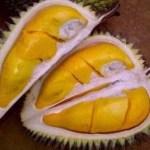 4 Destinasi Baru Agrowisata Buah Durian Bermutu Tinggi di Jawa Tengah