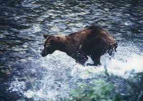 grizzlyhyder