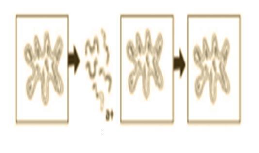 Cara Reproduksi Bakteri