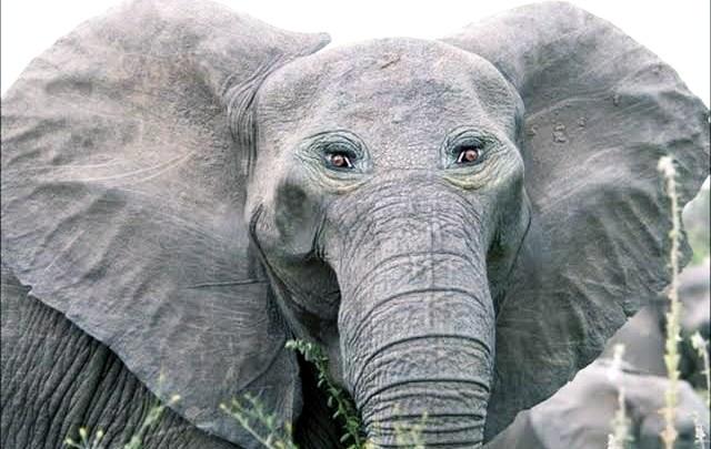 Arti Mimpi Melihat Lebah Dan Gajah