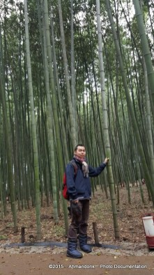 The Bamboo Forest Trail