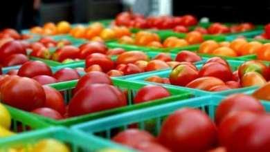 Photo of टोमॅटोला मिळाला दीड रुपया भाव !