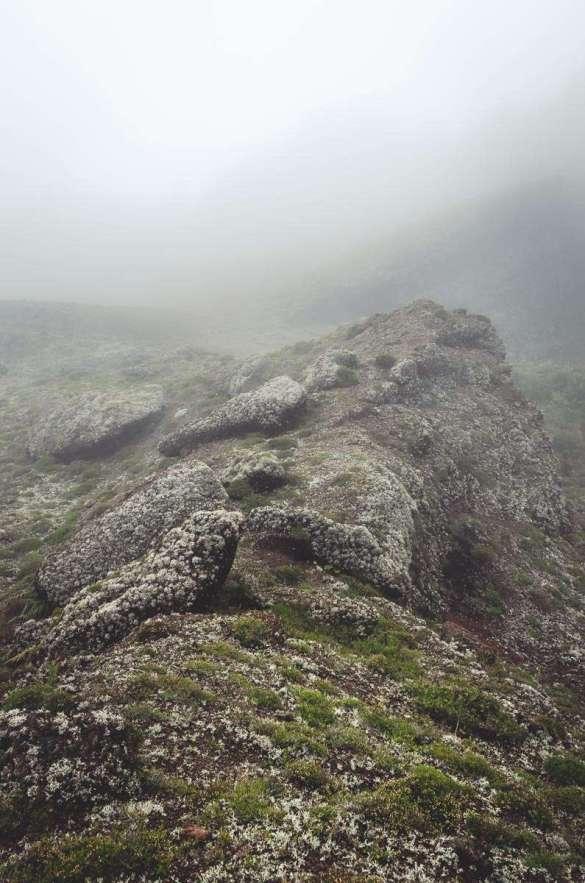Der Nebel wurde immer dichter.