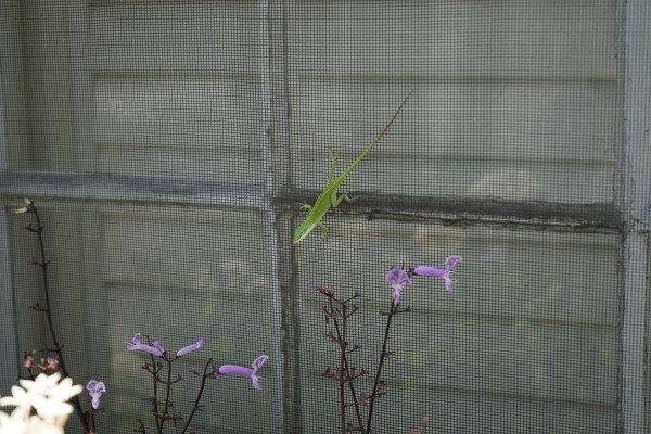 kleines grünes Gecko