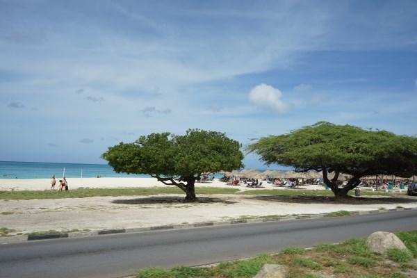 Divi Bäume Aruba