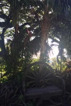 St. Kitts -Caribelle Batik - ein alter Baum