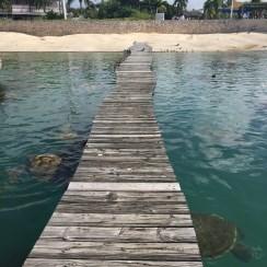 Schildkrötenfarm - Schildkröten - Leguane