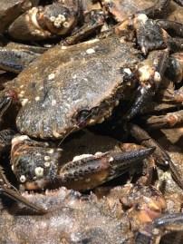 Markt Ausflug - am Fischstand - Krebs