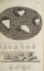 Micrographia3