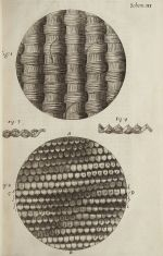 Micrographia4