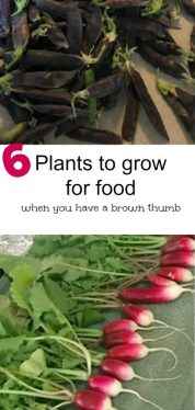 6 Plant to Grow for Food