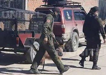 Efectivos policiales usaron canes adiestrados para la búsqueda de cuerpos.
