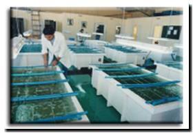 FORMOSA: Novedosa experiencia para criaderos de peces en ríos y riachos