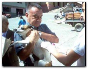 NECOCHEA: Campaña antirrábica 2015 para perros y gatos