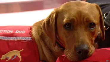 SALUD: ¿Cómo entrenan a los perros para que puedan detectar el cáncer?