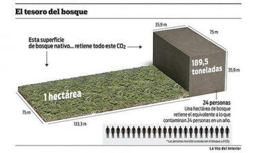 ECOLOGÍA: Bosques argentinos, claves para mitigar el cambio climático
