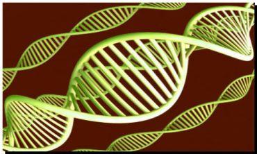 POLÉMICO: Crearían un banco genético de todos los bonaerenses