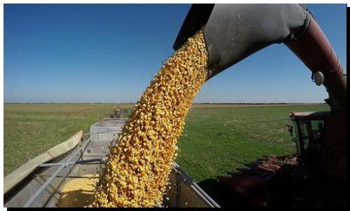 AGRO: El Gobierno cerró las exportaciones de maíz